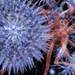Восемь причин, по которым стоит полюбить вирусы