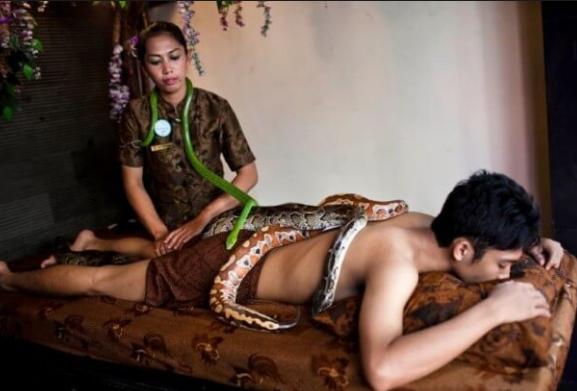 необычные спа-процедуры массаж змеями