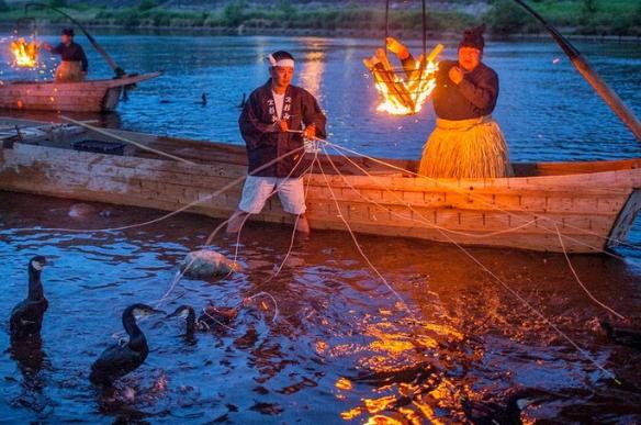 баклан рыболов