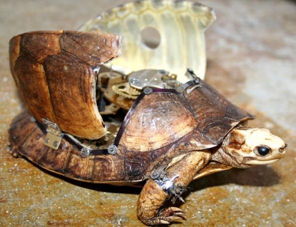 Чучела животных в стиле стимпанк