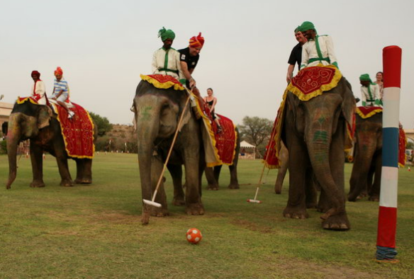 Слоновье поло