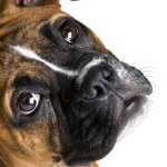 самые опасные собаки