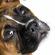 9 самых опасных собак