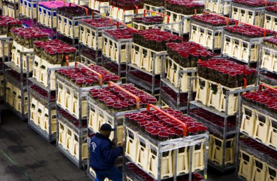 Самые большие здания Цветочный аукцион в Алсмере