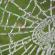 Самое интересное о паутине