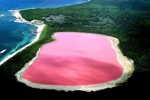 Уникальное явление розовое озеро