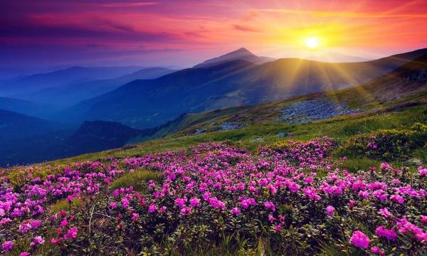 гималаи долина цветов