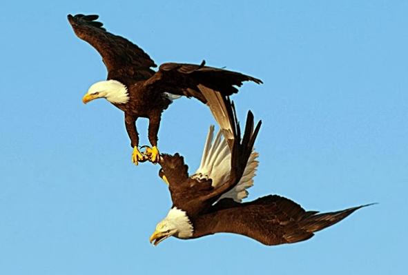 полет орлов