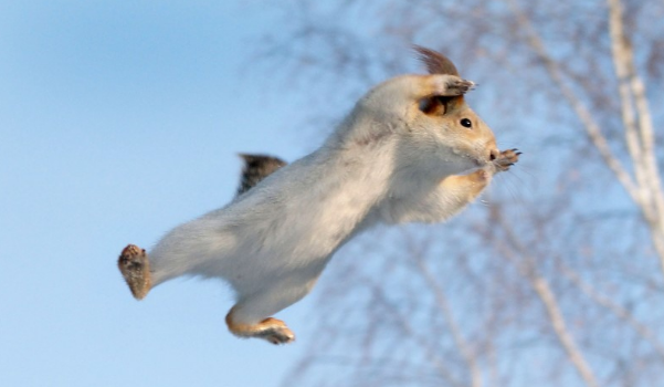 белка в прыжке
