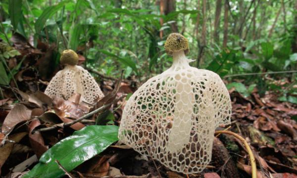 Растения тропических лесов