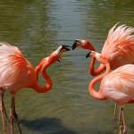 Интересные факты о фламинго