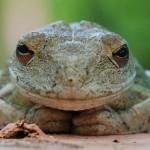 Интересные факты о лягушках