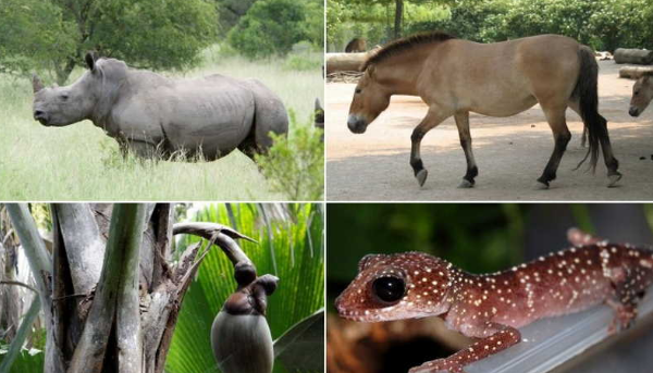 исчезающие виды животных