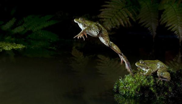 лягушка в прыжке
