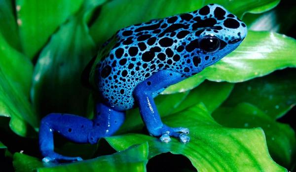 Мутированная лягушка