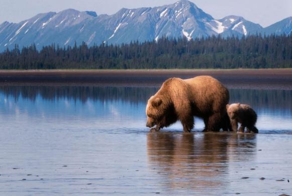 Аляска интересные факты животные