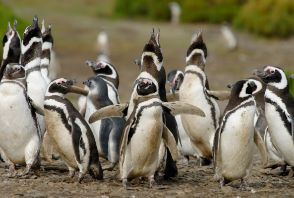 Аргентина флора и фауна