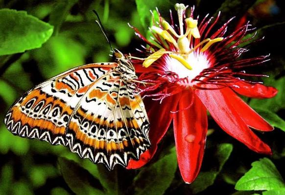 бабочки интересные факты