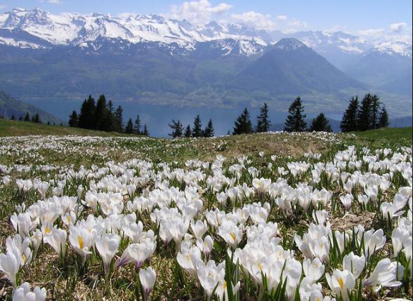 экология Швейцарии