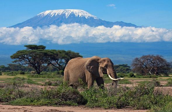 Интересные факты об Африке Килиманджаро