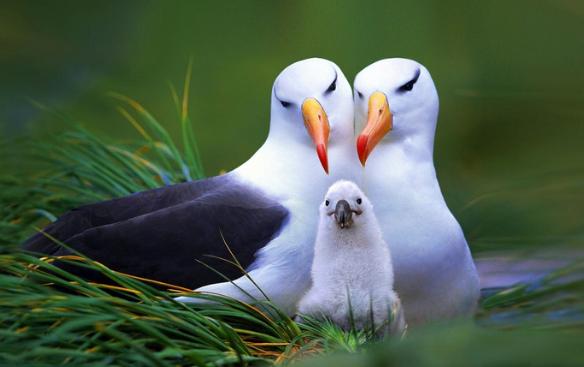 интересные факты про птиц