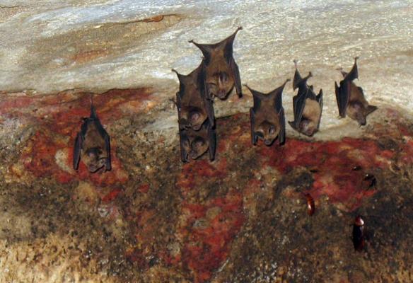 летучая мышь места обитания