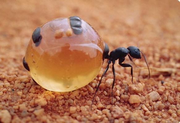 муравьи факты