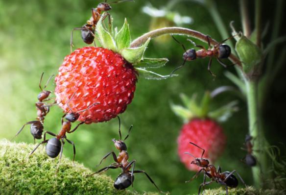муравьи интересные факты
