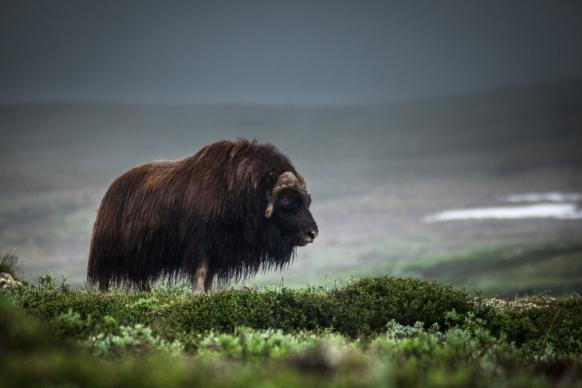 Норвегия флора и фауна