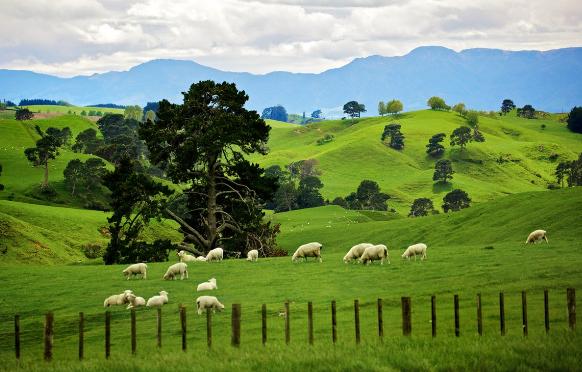 Новая Зеландия экономика