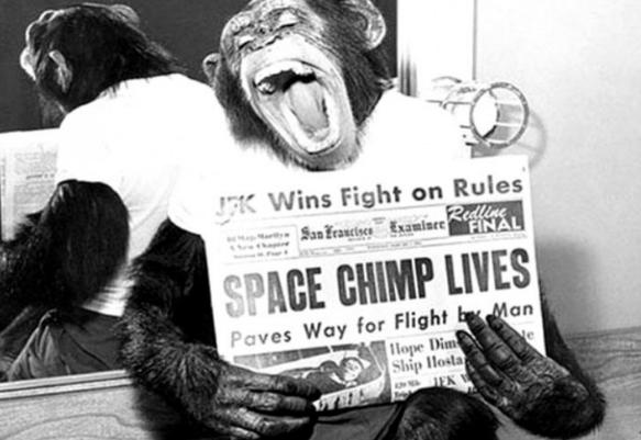 объем мозга шимпанзе