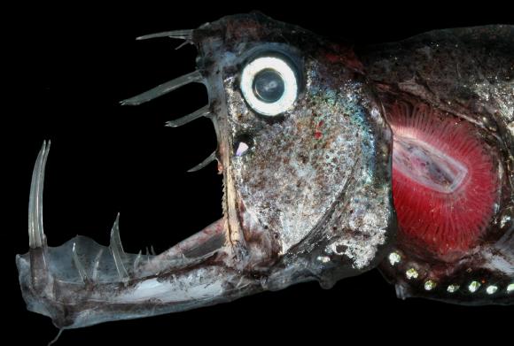 обитатели рифов морской черт