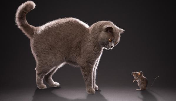 охота кошки