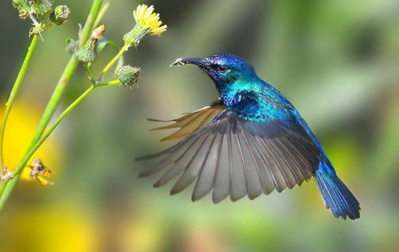 Птицы колибри