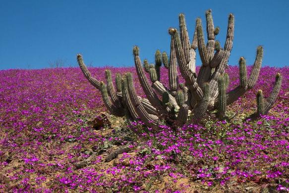 Республика Чили природа