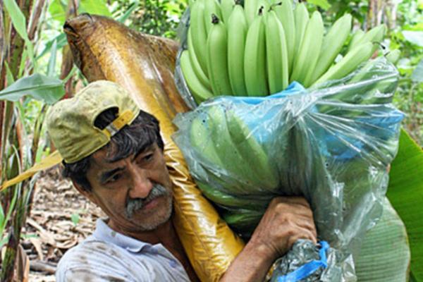 страны производители бананов