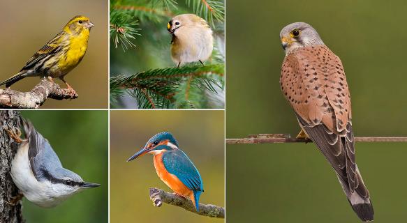 Виды птиц