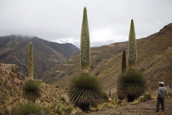 Южная Америка климат