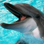 один дельфин